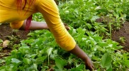 18 Moreen picking herbs